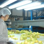 Lemon Packing - Argentina