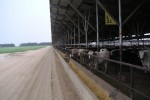 Cattle Feedlot, Nebraska