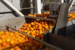 Orange Juice Processing