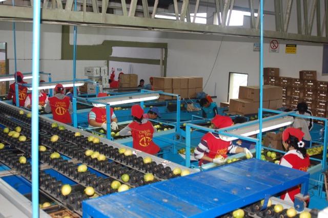 Lemon processing - Argentina
