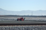 Strawberries, Watsonville, CA