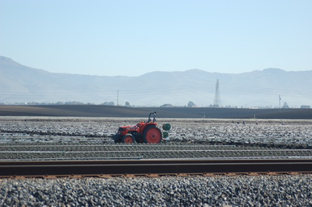 Strawberries, Watsonville, CA